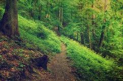 Foresta scandinava del nord Immagini Stock Libere da Diritti