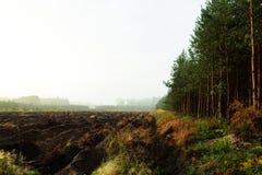 Foresta scavata Immagini Stock