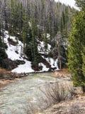 Foresta scenica della montagna con la corrente in Colorado Fotografia Stock