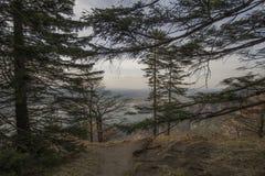 Foresta scenica della montagna con le rocce e le scogliere Immagini Stock