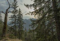 Foresta scenica della montagna con le rocce e le scogliere Immagine Stock