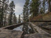 Foresta scenica della montagna con le rocce e le scogliere Fotografie Stock Libere da Diritti