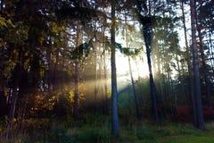Foresta scenica delle latifoglie verdi fresche incorniciate dalle foglie, con il sole che fonde i suoi raggi caldi attraverso il  immagini stock