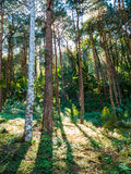 Foresta scenica di mattina Fotografia Stock