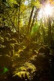 Foresta Schatten Lizenzfreies Stockbild
