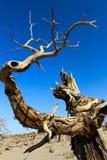 Foresta sconosciuta Fotografia Stock Libera da Diritti
