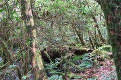 Foresta sconosciuta e mistica sull'più alta cima della Tailandia Fotografie Stock Libere da Diritti