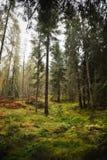 Foresta in Scozia Fotografie Stock Libere da Diritti