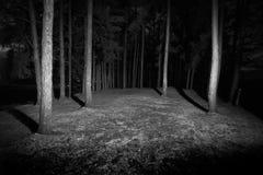 Foresta scura Fotografia Stock