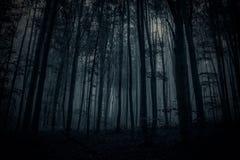 Foresta scura Fotografie Stock
