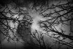 Foresta scura Fotografie Stock Libere da Diritti