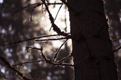 Foresta scura Immagini Stock Libere da Diritti