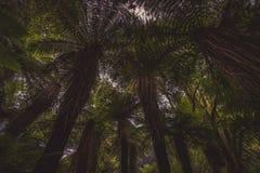 Foresta scura con gli alberi della felce dall'angolo basso fotografia stock libera da diritti