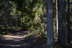foresta scura con i tronchi di albero che gettano le ombre sulla terra fotografie stock