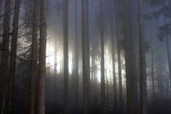 Foresta scura con il sole che splende attraverso la nebbia fotografia stock libera da diritti