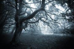 Foresta scura con l'albero e la nebbia misteriosi torti Fotografia Stock Libera da Diritti