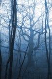 Foresta scura con nebbia Immagini Stock Libere da Diritti