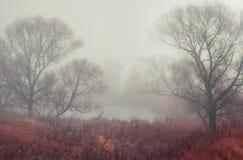 Foresta scura con nebbia e gli alberi sconosciuti enormi symmertical Fotografia Stock Libera da Diritti