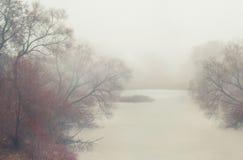 Foresta scura con nebbia e gli alberi sconosciuti enormi symmertical Fotografie Stock Libere da Diritti