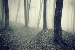 Foresta scura con nebbia fra gli alberi fotografie stock
