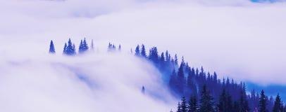 Foresta scura conifera nella nebbia nelle montagne Sguardo d'annata mistico fotografie stock