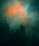 Foresta scura di tramonto Fotografia Stock Libera da Diritti