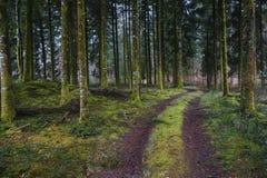Foresta scura misteriosa Fotografie Stock