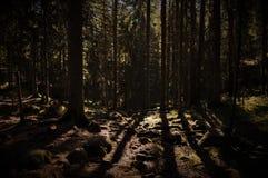 Foresta scura profonda con il sole che splende da parte a parte immagini stock