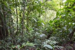Foresta secondaria, pendio caraibico, Costa Rica immagine stock libera da diritti