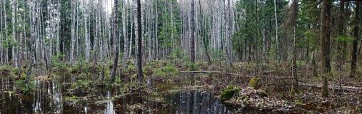Foresta selvaggia Immagine Stock Libera da Diritti