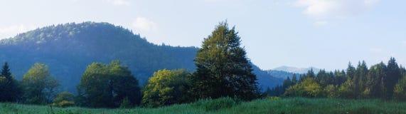 Foresta selvaggia Fotografia Stock Libera da Diritti