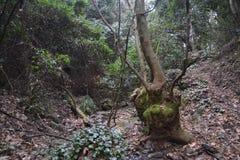 Foresta selvaggia Immagini Stock Libere da Diritti