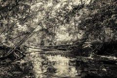 Foresta selvaggia con insenatura - alta gamma dinamica Fotografia Stock Libera da Diritti