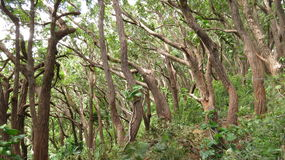 Foresta selvaggia sulla strada a Hana Fotografia Stock