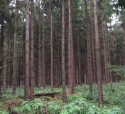 Foresta semiaperta Fotografie Stock