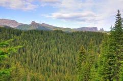 Foresta sempreverde in alpi italiane Fotografia Stock