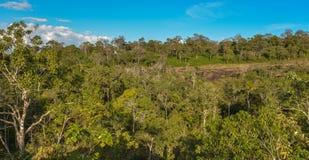 Foresta sempreverde asciutta Immagini Stock Libere da Diritti