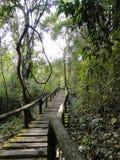 Foresta sempreverde in Chiang Mai, Fotografia Stock