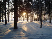 Foresta siberiana Fotografia Stock