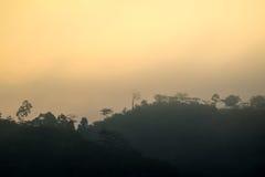 Foresta in siluetta Fotografia Stock