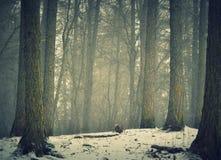 Foresta Smoggy Immagini Stock Libere da Diritti