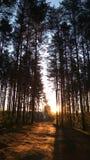 Foresta, sole immagini stock