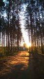 Foresta, sole, mattina fotografie stock libere da diritti