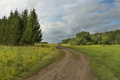 Foresta, sole, strada di estate Immagine Stock Libera da Diritti