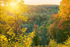 Foresta soleggiata di caduta Fotografie Stock Libere da Diritti