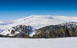 Foresta sotto neve fotografia stock libera da diritti