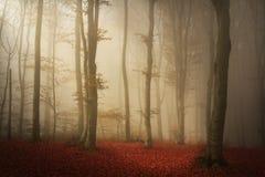 Foresta spaventosa del fogy fotografie stock