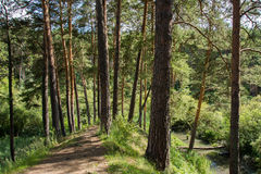 Foresta spessa Fotografie Stock Libere da Diritti