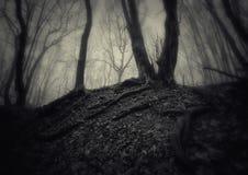 Foresta spettrale scura con nebbia su Halloween Immagini Stock Libere da Diritti