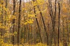 Foresta stagionale delle foglie della corteccia di albero del tronco di colore spesso scuro di caduta immagini stock